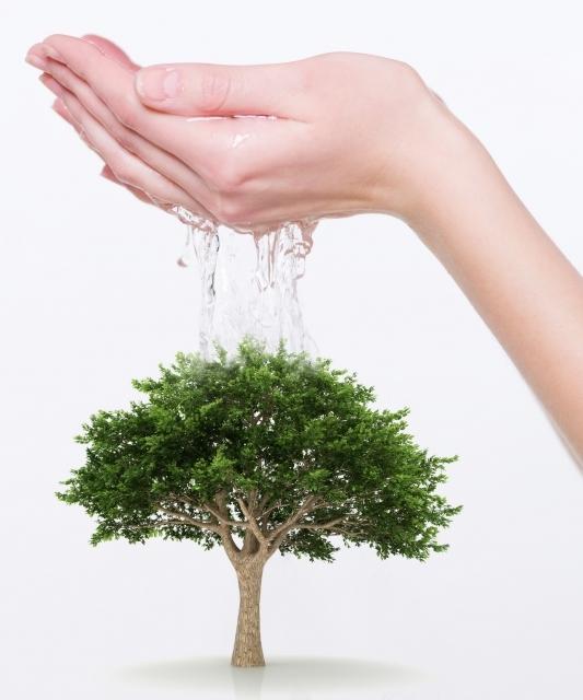 watering-tree